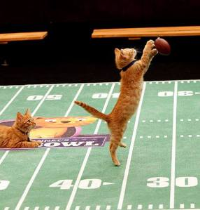 The Inaugural Kitten Bowl. Photo/HALLMARK